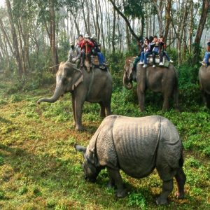 Kathmandu Pokhara Chitwan Tour image picture views of jungle safari