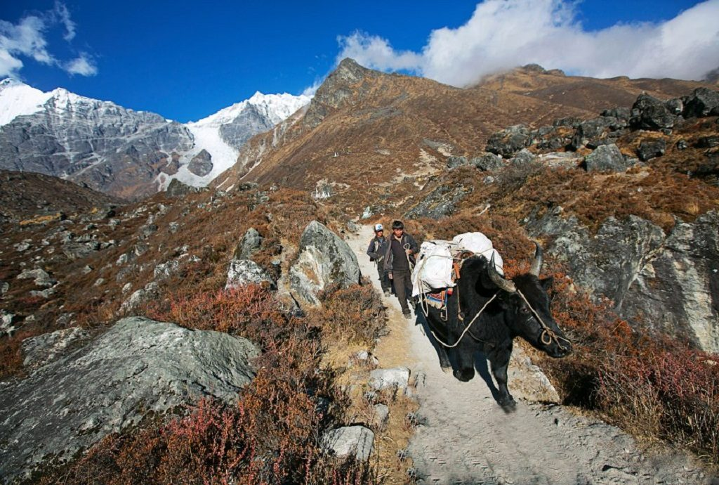 Jokpyo at Langtang Valley trekking with mountain Himalaya