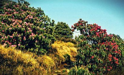 Panchase Trekking image picture