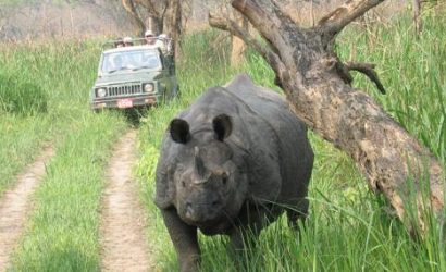 Chitwan National Park Jungle safari Chitwan National park jeep safari activity