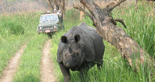 Chitwan National park jeep safari activity