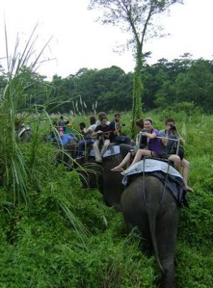 Chitwan national park jungle safari