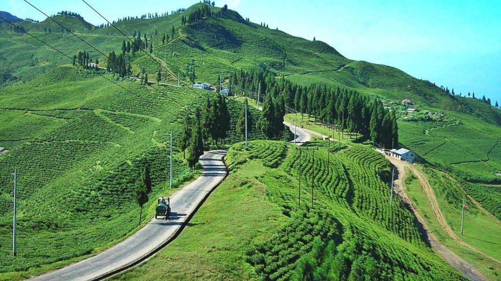 Illam Tea garden Hill