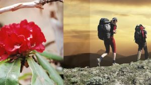Best season for Trekking Visit Trekking in Nepal Best time of the year Best time To Trek & Visit In Nepal