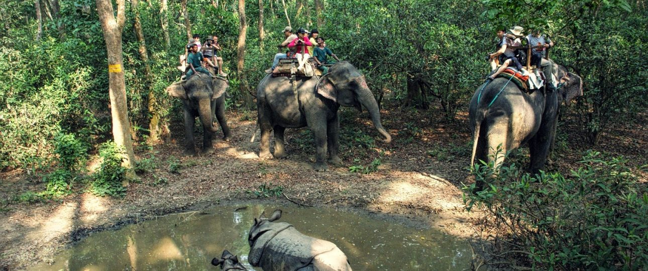 Chitwan Jungle Safari, Things to do in Chitwan tourism activities,in Sauraha